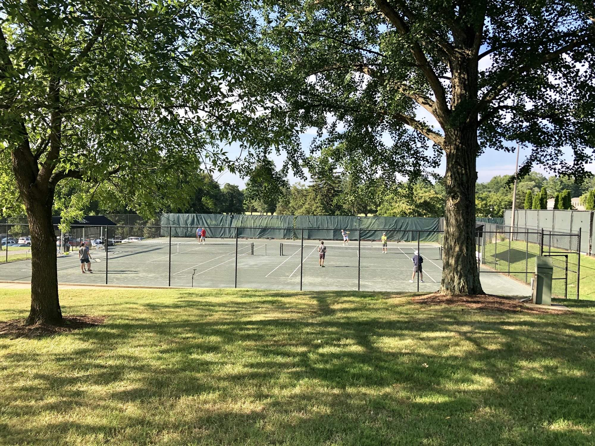 Tennis_behind_trees